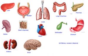 Types Of Organ Transplants