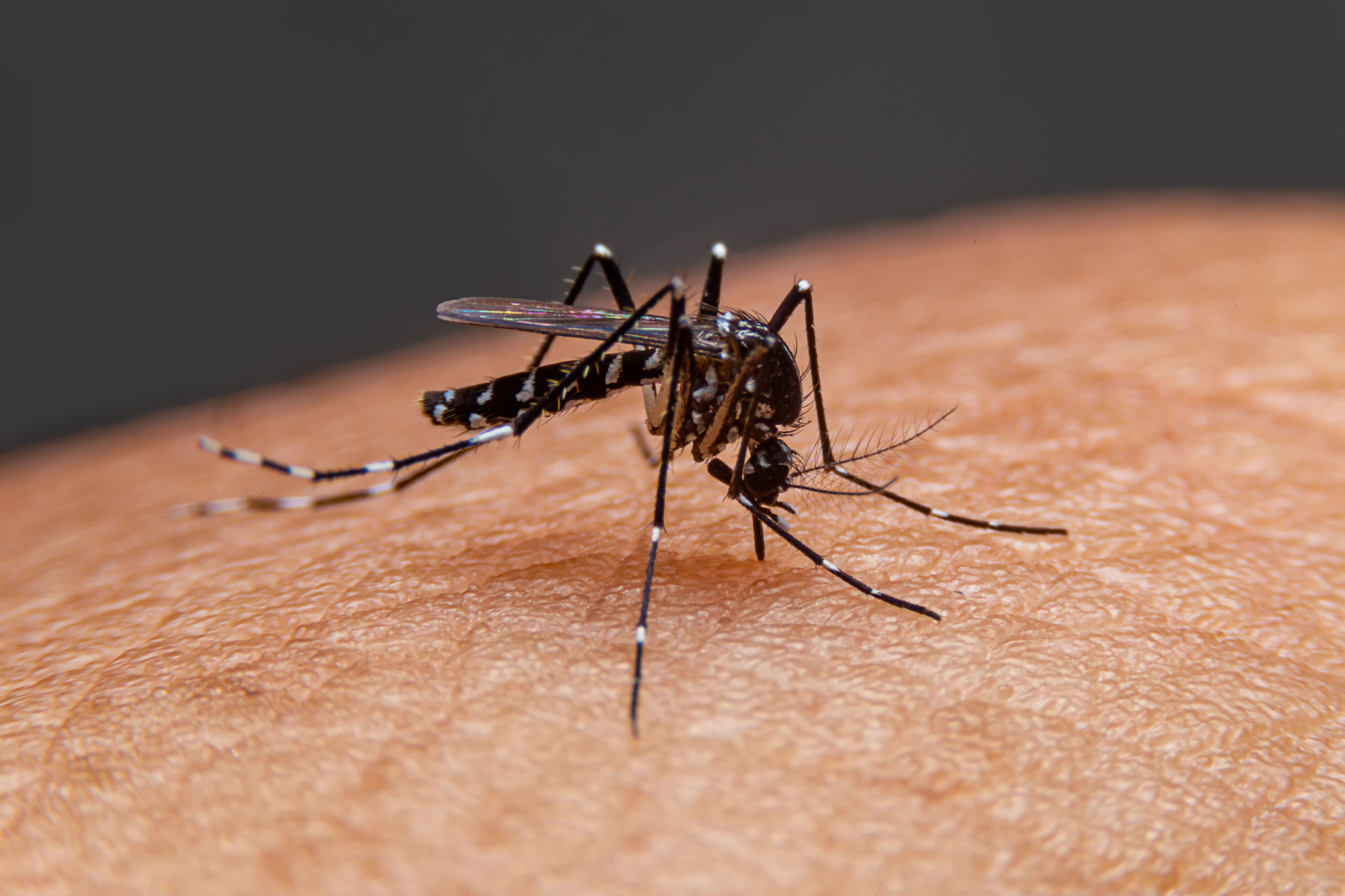 Tips to Prevent Dengue Fever, Chikungunya and Malaria