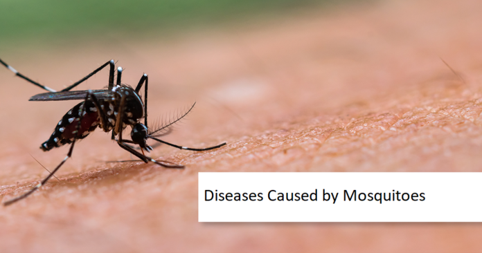 Diseases Caused by Mosquitoes