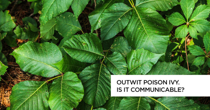 Outwit Poison Ivy