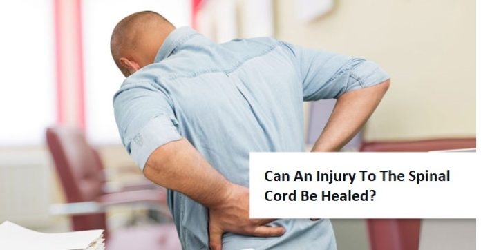 Can An Injury To The Spinal Cord Be Healed